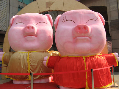 Lucky pigs for new year