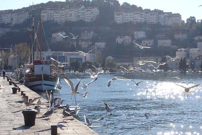 Seagulls eatıng some fish guts.