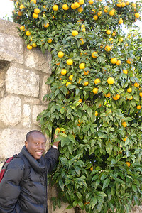 Picking an orange from the neighbors tree. Unfortunately they are not the edible kınd...