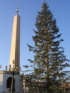 The tallest Christmas tree yet in Vatican Square