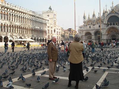 Ahhh... pigeons!!!