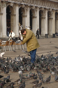 Innocent tourist being attacked by mobs of hungry pigeons