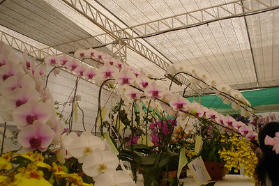 Orchid Pavillion with specimens from all over the world.