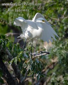 Photo taken at Elmendorf Lake next to Our Lady Of The Lake University in San Antonio, Texas