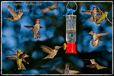 Hummingbirds 3A