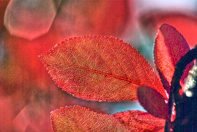 Feuille d'automne - Autumn leave