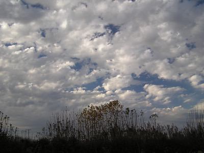Clouds over BW orchard