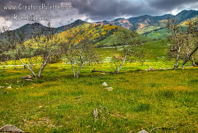 Scenes along Dry Creek Drive in Tulare County Foothills.  A storm was brewing but the sunshine periodically popped through the clouds for dramatic lighting on beautiful hillside views.