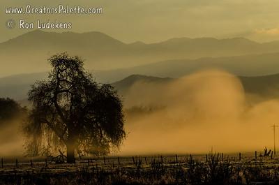 I liked the swirling morning fog.