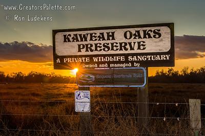 Kaweah Oaks Preserve 1-27-2013