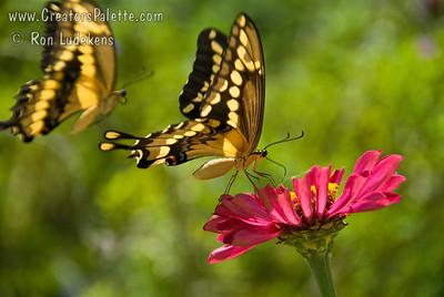 Photo taken at the Natural Gardener, Austin, TX The Butterfly garden.