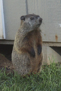 Groundhog, Jr.
