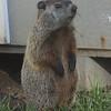 Groundhog, Jr.