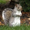 Happy little squirrel