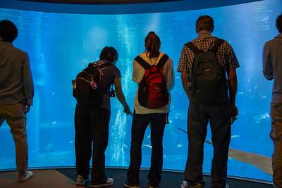 Osaka Kaiyukan Aquarium 2013