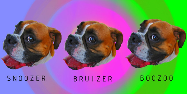 THE MANY FACES OF BRUIZER. I DID THIS IN PAINT.NET