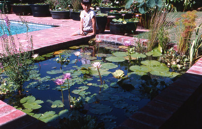 Our pond at its peak.