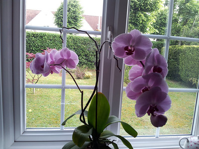 Our wonderful orchid - it just keeps on flowering