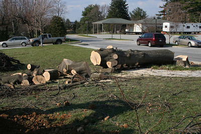 12/7/2006: The huge old oak tree had to come down.   However, it is our pleasure to tell you that our beloved oak tree is going to grace our new worship center as a rough-hewn cross and other meaningful worship elements.