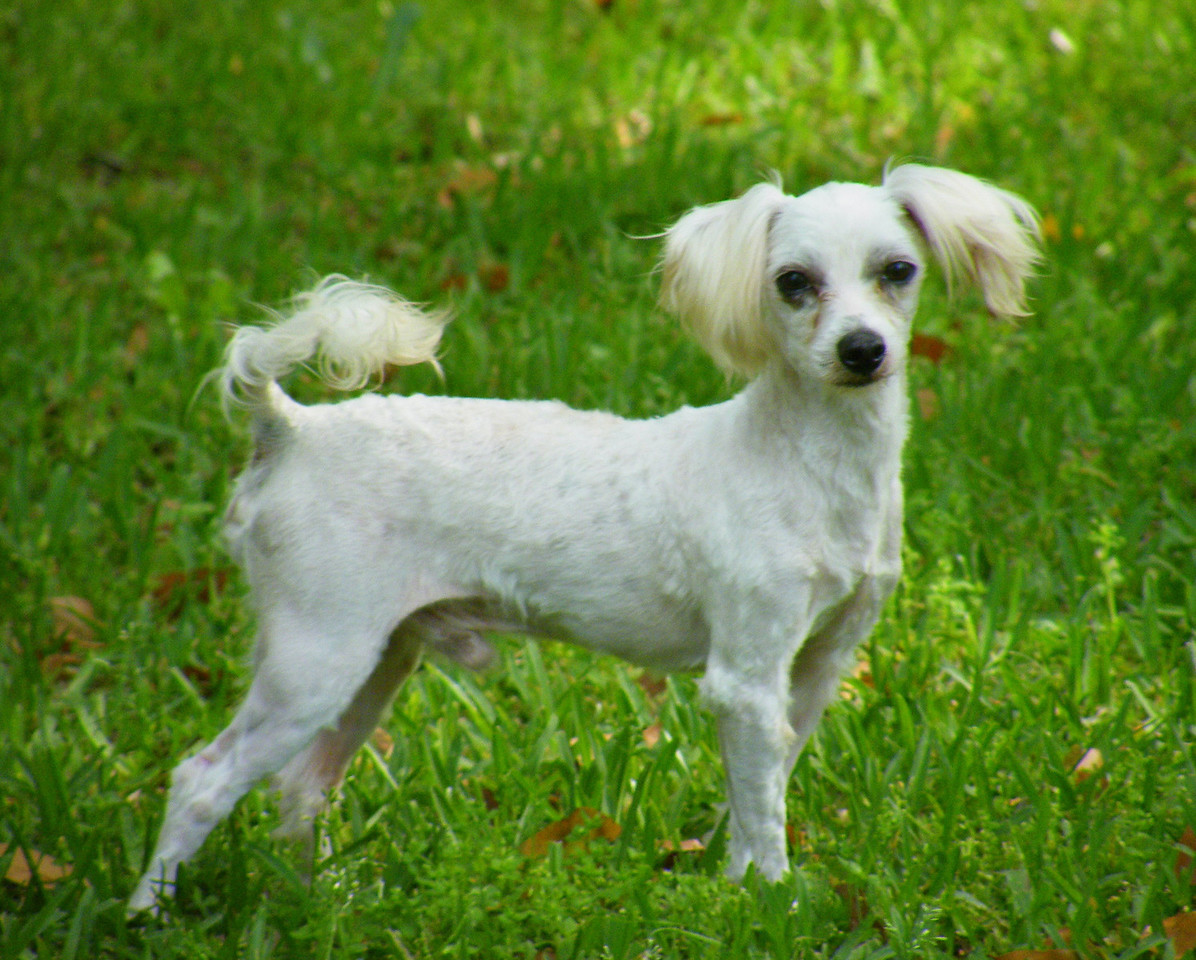 Maximus<br /> <br /> Maximus is our Maltese. He is very out going and playful!