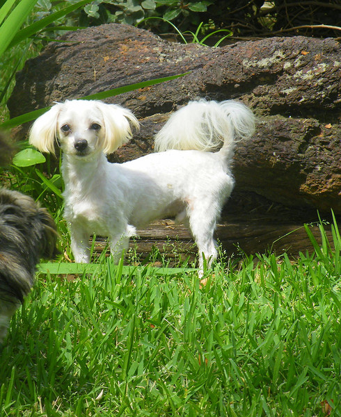Casper<br />  Gender:Male <br /> Breed:Maltese
