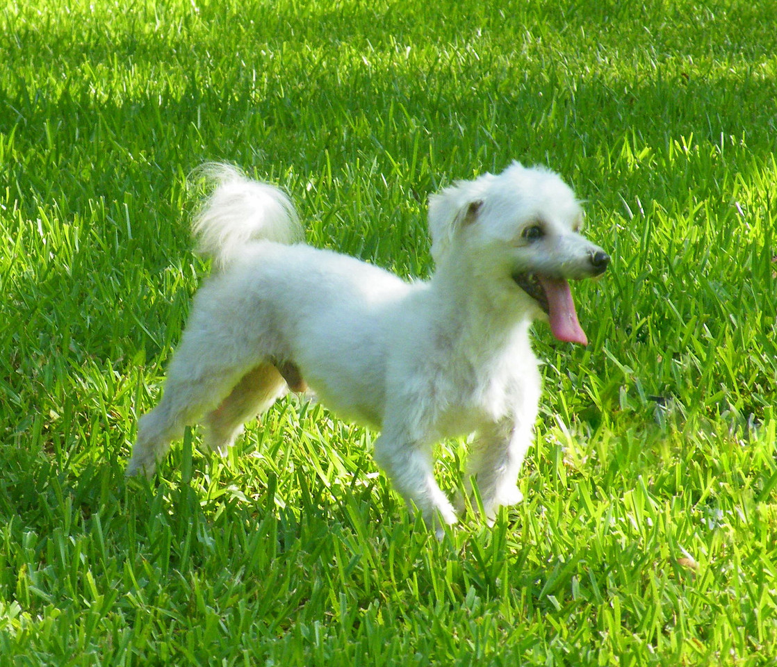 Magnum<br /> <br /> Magnum is our Maltese. He is adventurous and curious about everything. He loves to get his belly rubbed!