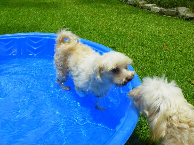Sallys trying to convince Maximus to get in the pool with her.