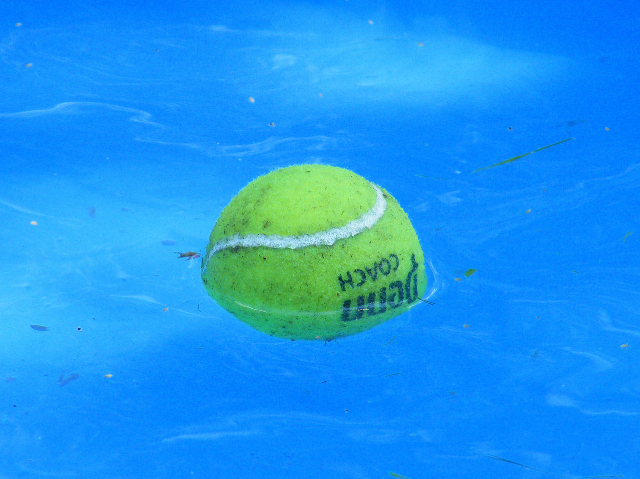 The infamous tennis ball.