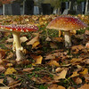 Fly Agaric Fungi by Mary Tozer, 2nd.
