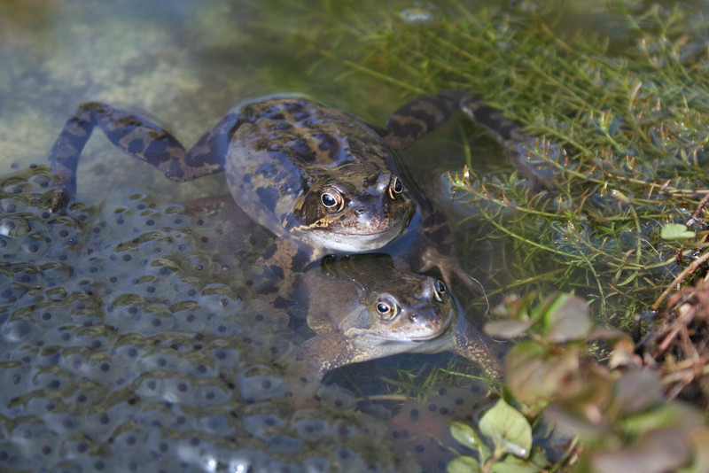 Frog Spawn by Elsie Sinclair ( Special Mention )