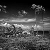 BARBADOS by Ken Payne ( Highly Commended )