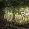 WOODLAND LIGHT by John Allen ( Highly Commended )