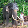 OLD TUSKER WITH MAHOUT by JOHN BROOKS (Special Mention)