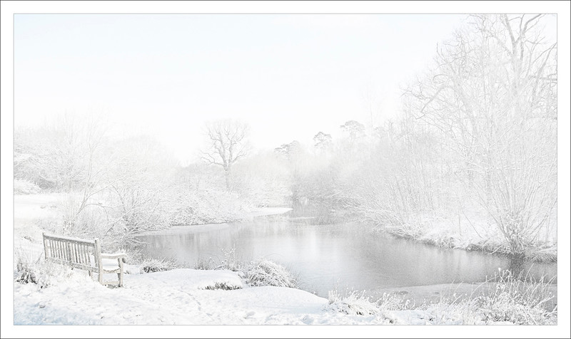 HATFIELD FOREST IN THE SNOW by MARIE KING (1st)