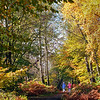 AUTUMN (Highly Commended) by John Brooks