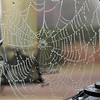 AUTUMN COBWEB by Colin Wright.