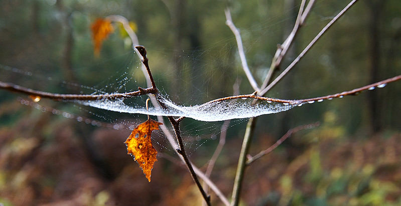AUTUMN DEW by Bryn Gibbons