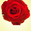 The Sign of the Rose by Rob Furber