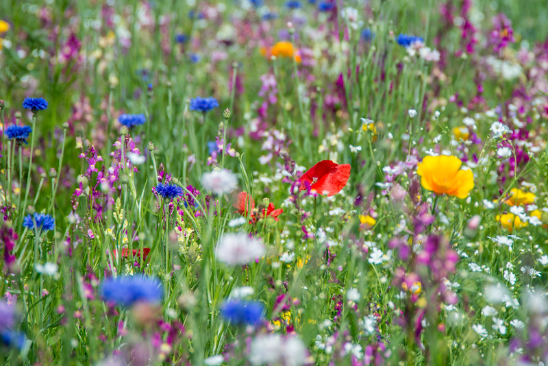 Flower Meadow by John Allen