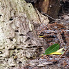 HOLES IN THE WOOD by JOHN COGSWELL