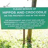 HIPPOS AND CROCODILES by Pam Marsh