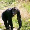 Mathew at the zoo-002