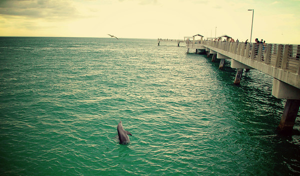 04.29.12~Dolphins at Fort Desoto Pier