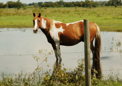 06.12.12~Sixteen Hands Horse Refuge