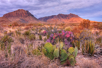Mountains and Purple Prickly Pear Cactus