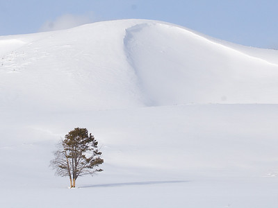 Lone tree in the snow.