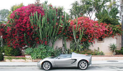 The Elise in her 1st year, location is Solana Beach