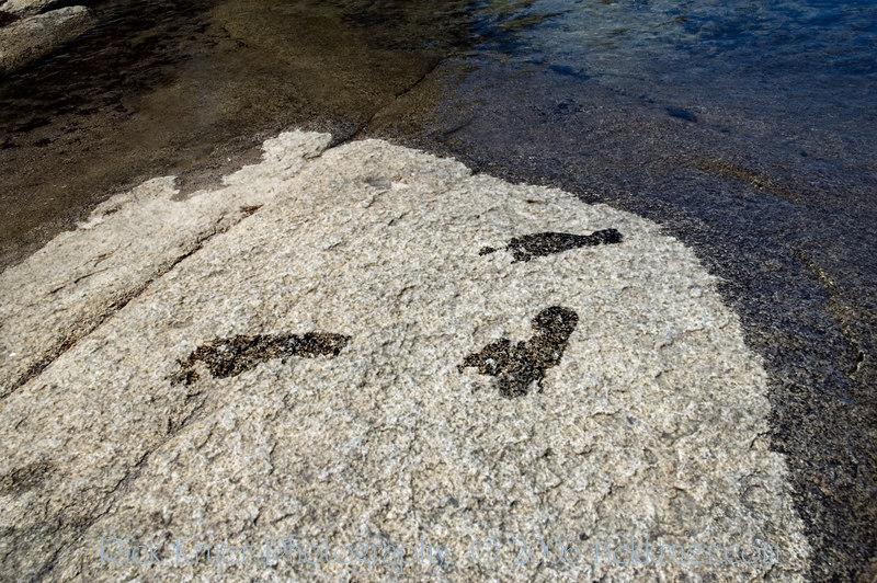 Footprints at Tenaya Lake.