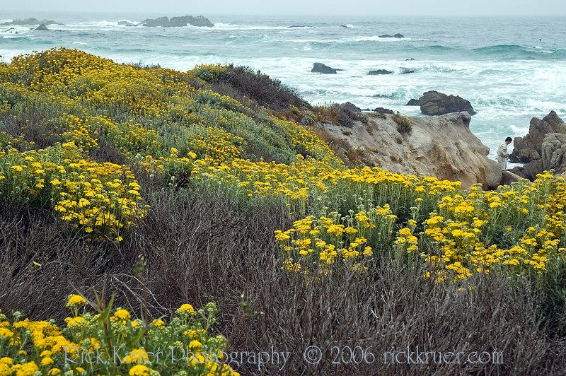 17 Mile Drive in Monterey, CA wildflowers on the ocean. The ocean is a beautiful aqua blue.<br /> ND70_2006-07-09DSC_4261-Flowers-2.jpg