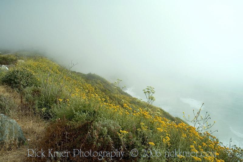 Wildflowers on the coast road, ocean can barely be seen below due to heavy fog.<br /> ND70_2006-07-08DSC_4216-OceanFlowersFog-2